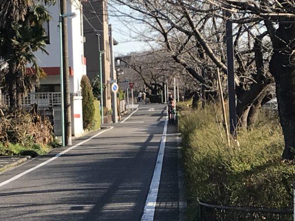 山崎川 四季の道