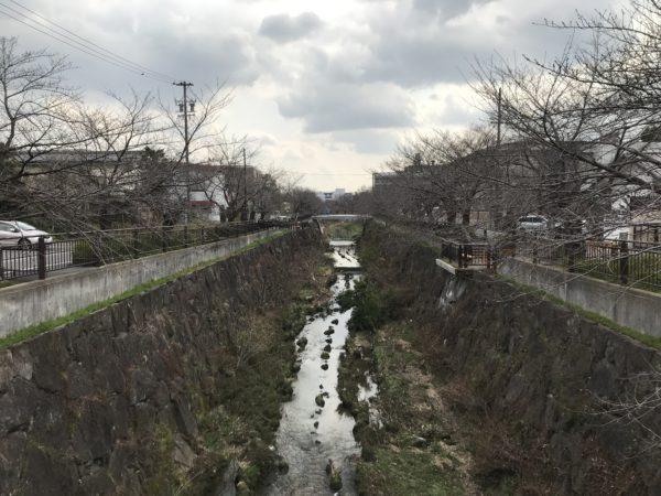 山崎川の桜開花情報 2019/3/12