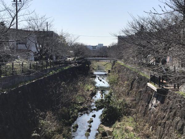 2019年3月20日の山崎川