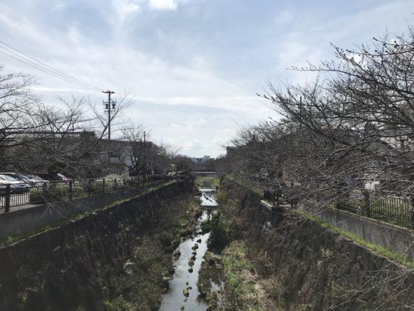 2019年3月22日の山崎川