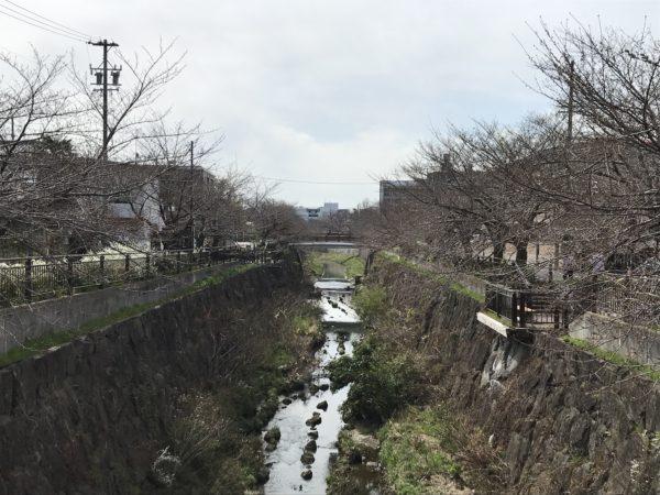 2019年3月26日の山崎川